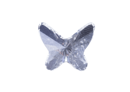 Clear Buttefly